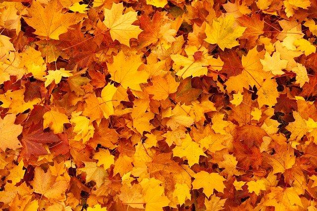 Autumn leaves represent the color orange