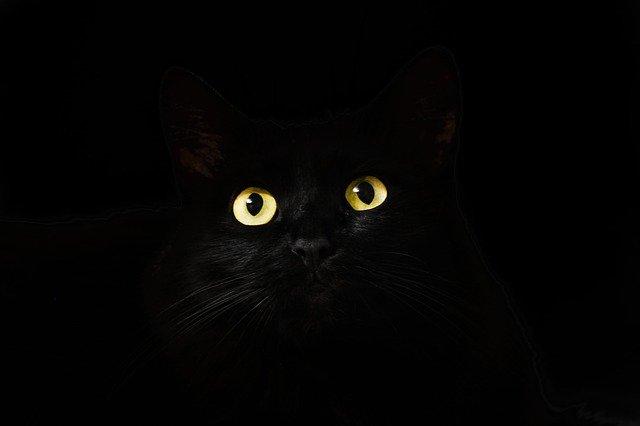 A black cat represents the color black